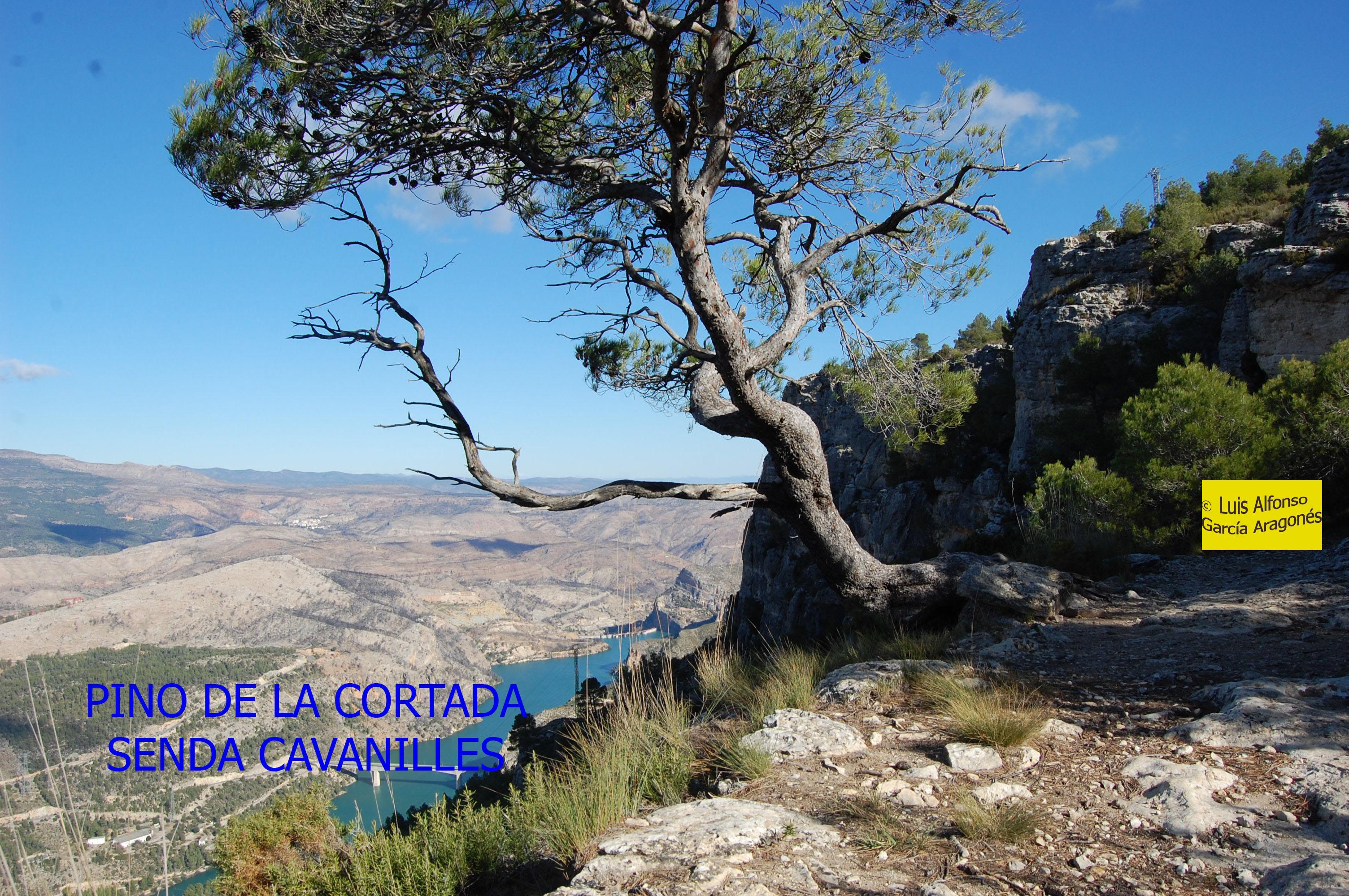 Pino de La Cortada - Punto 4 copia